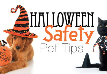 Keep Your Pet's Halloween From Becoming Beastly!