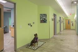 Noah's Westside Animal Hospital-37