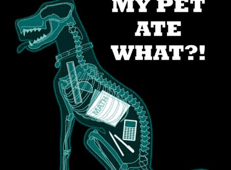 WEIRD THINGS PETS EAT