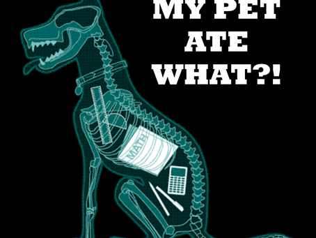 WEIRD THINGS PETS EAT