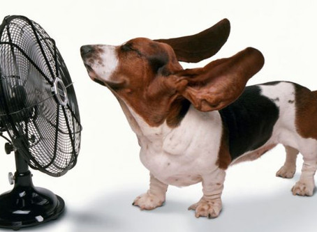 Summertime & Heat Related Dangers for Pets