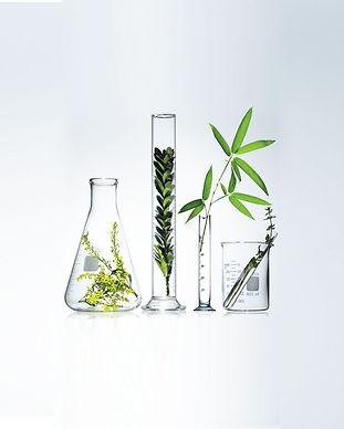 Lab-plants.jpg
