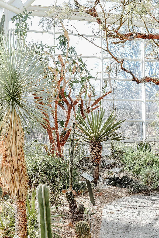 Brooklyn Botanic Garden (c) Silvie Bonne