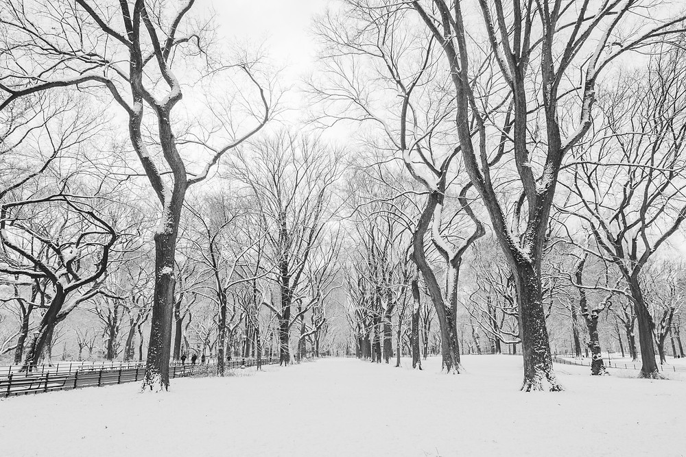 Snow in Central Park (c) Silvie Bonne