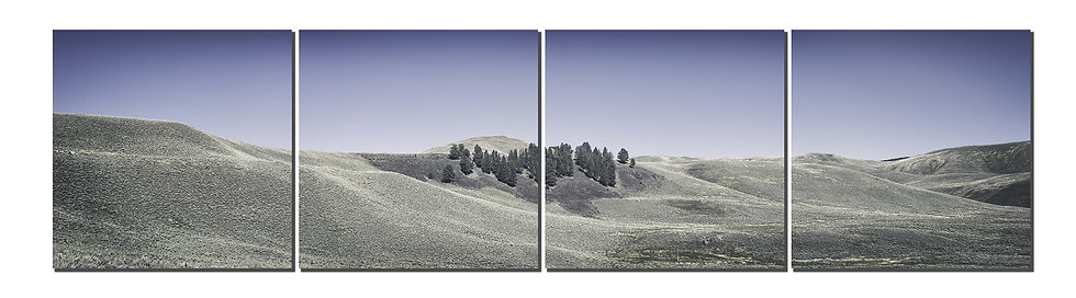 "Lamar Valley Yellowstone National Park 20"" X 80"" split in four canvas standout"