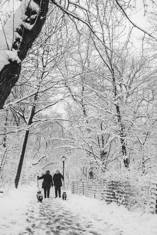 Snow in Central Park (c) Silvie Bonne