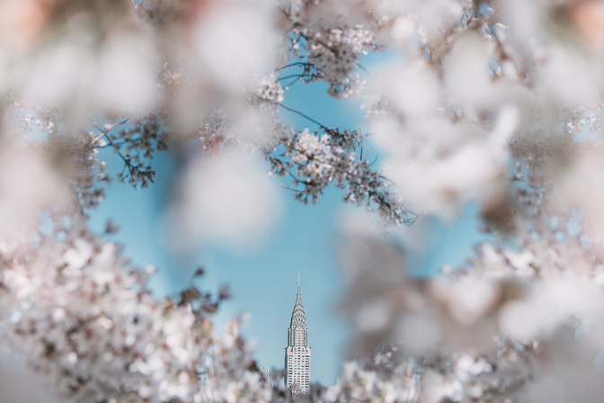 NYC in Bloom