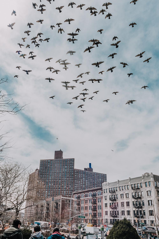 Dorrance Brooks Square Harlem (c) Silvie Bonne