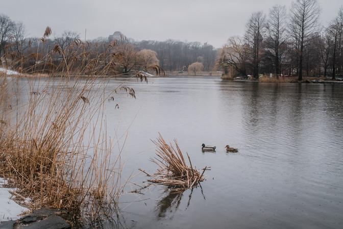 Central Park in de regen