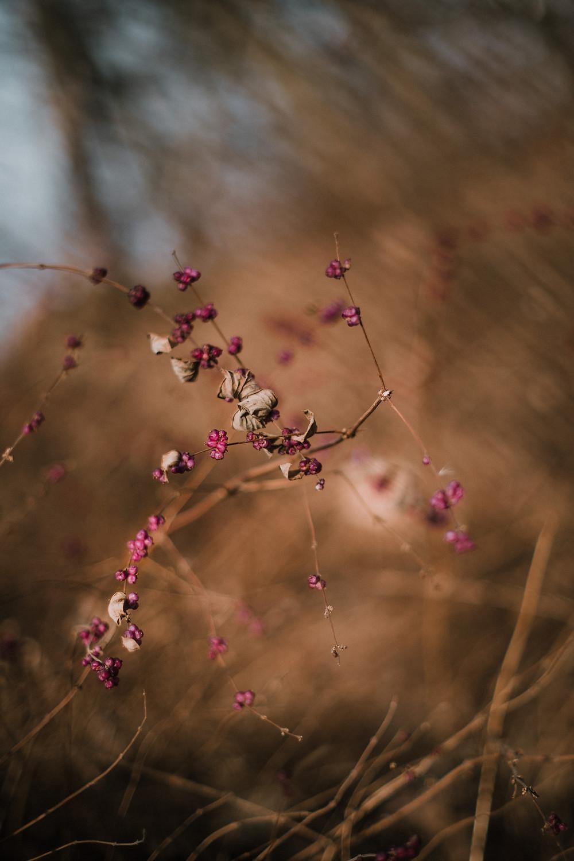 Winter in Central Park (c) Silvie Bonne