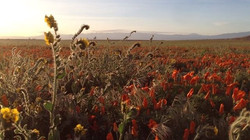 Shot on iphone 5. Antelope Valley.