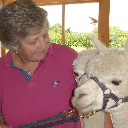 About Jan Millward - Jan and the alpacas