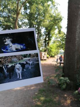 Sofortbilder von Hunden
