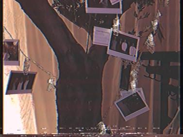 Sofortbilder im Olivenbaum