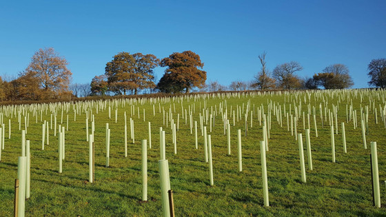 11000 trees planted in mid Devon as a new woodland creation project. We started this two weeks ago a