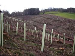 Large Plantation.png