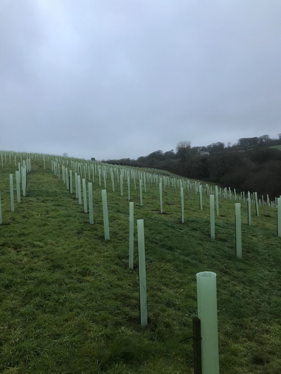 6000 new native trees in this compartment. We have several compartments to fill on this estate. 40%