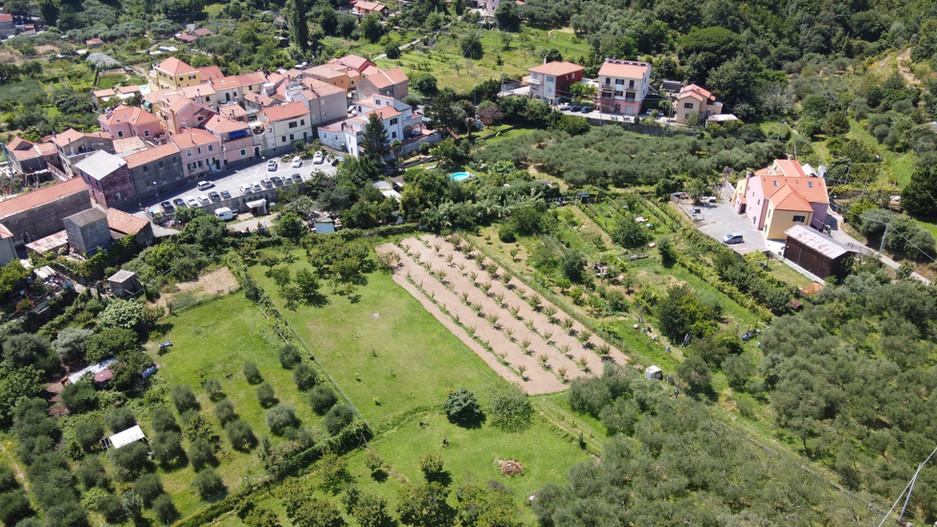 L'ALBICOCCA, STAR DELLA NUOVA AGRICOLTURA