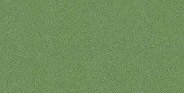Leather Kiwi