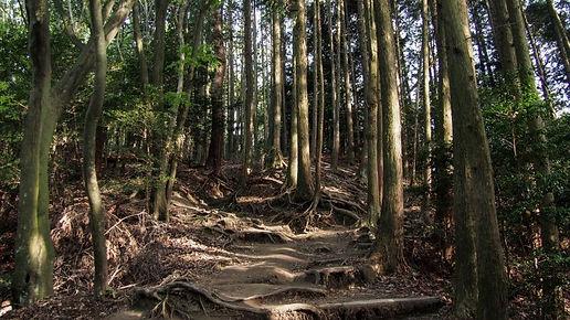 interning-at-japan-travel-150808.jpg