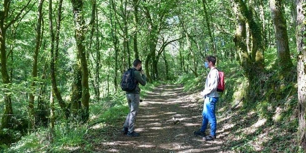 Ruta de sendeirismo: Touro - Patrimonea