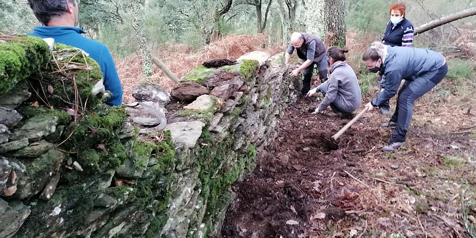 ADEGA - Actividades de custodia do Sobreiral do Arnego en Carmoega - Concello de Agolada (Pontevedra)