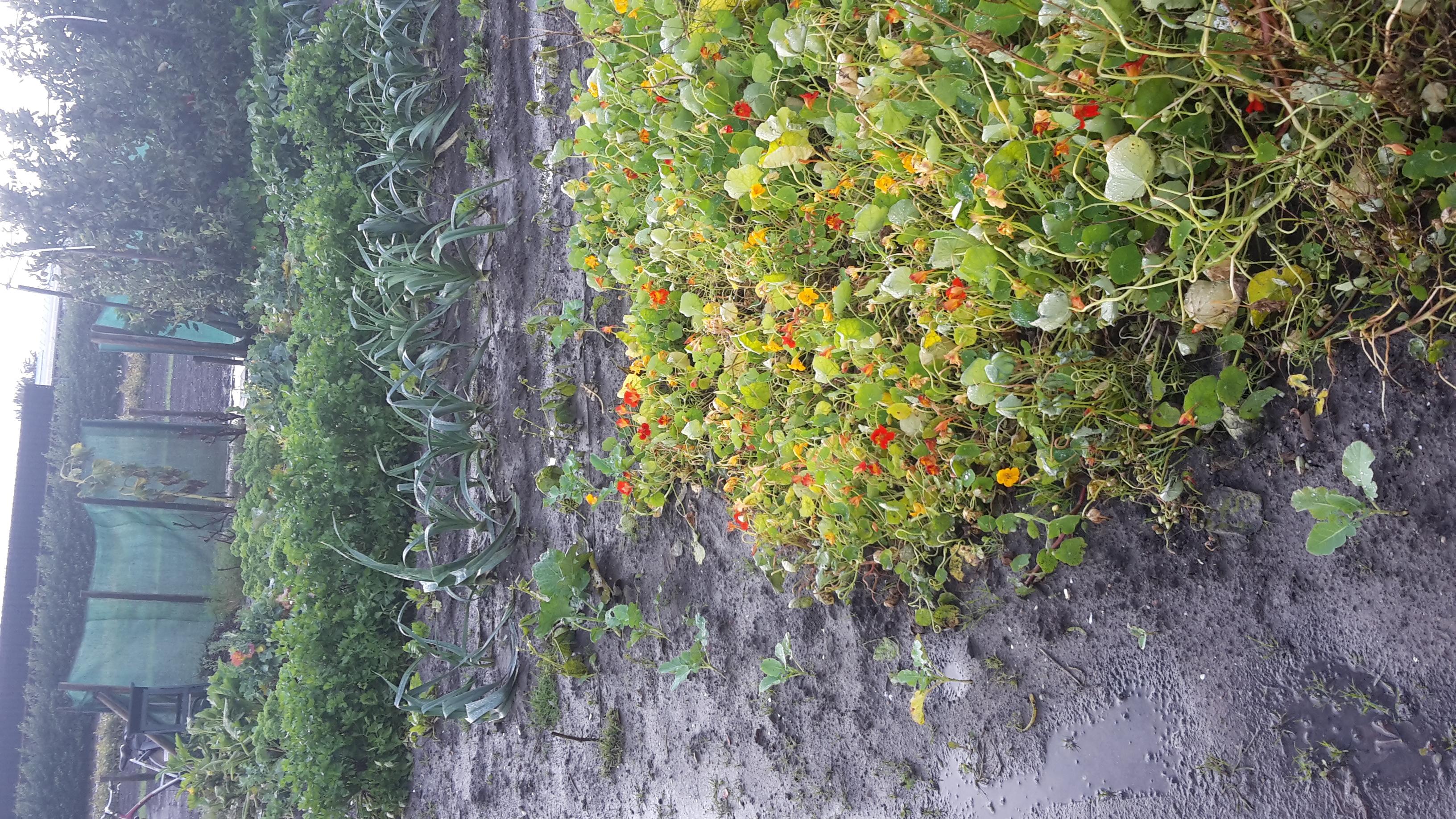 tuin 14 september