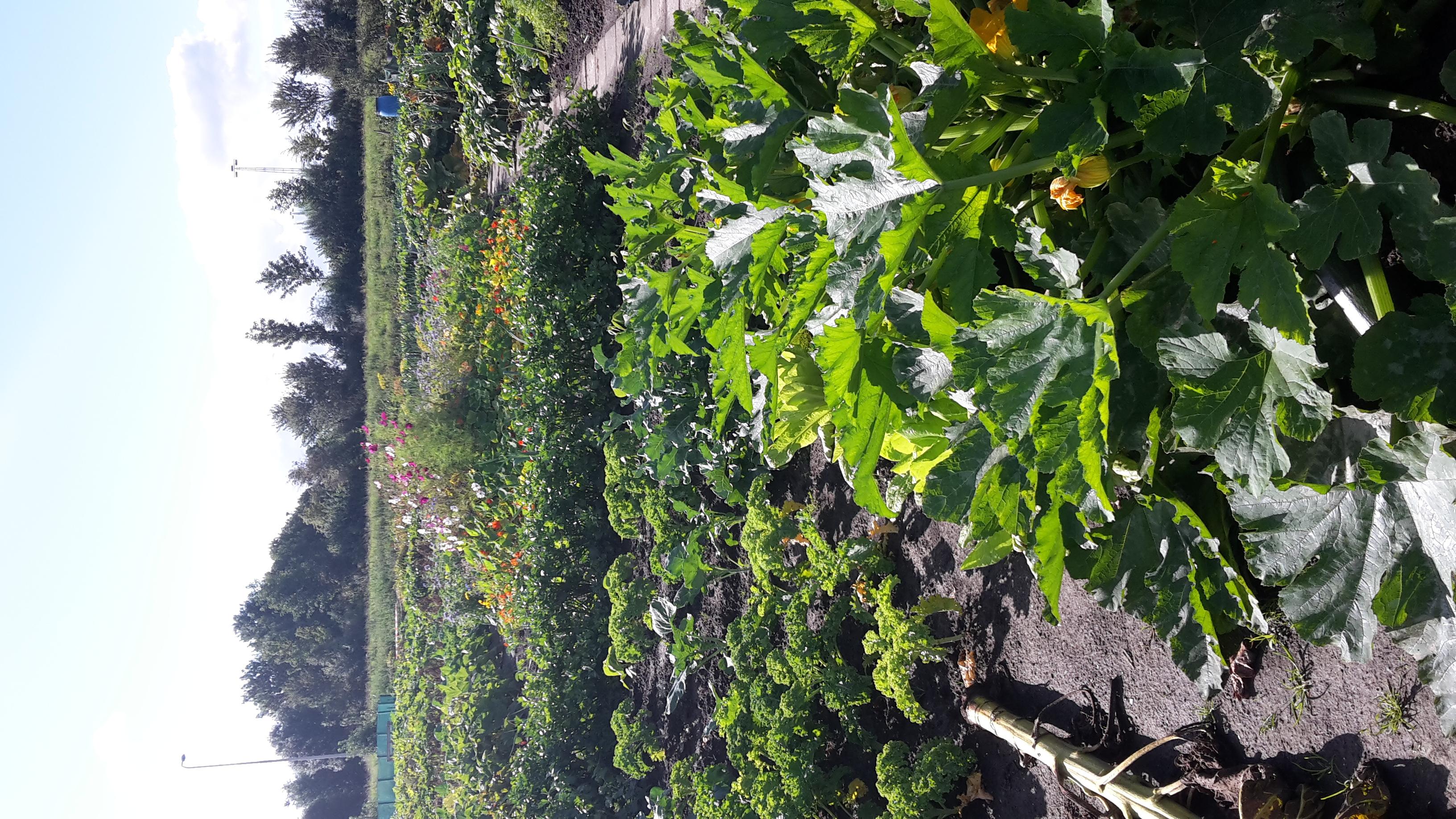tuin 22 augustus