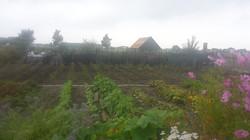 tuin september