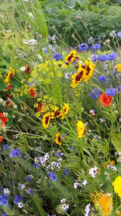 Bloemen in het medaillon in augustus