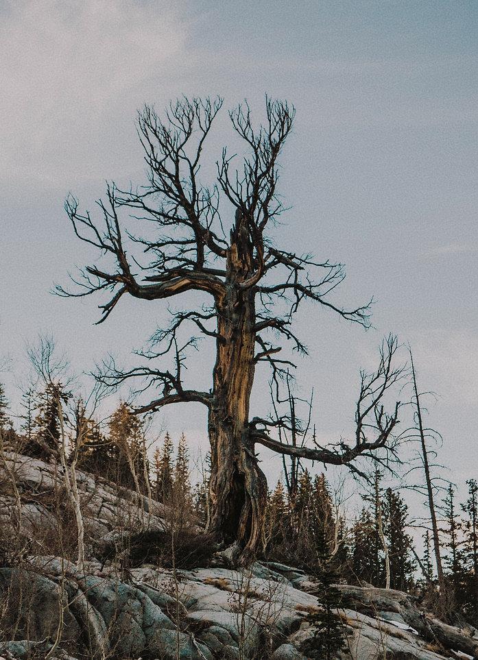 tree (1).jpg