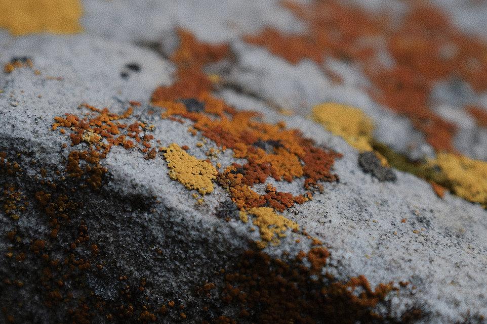 Moss (1).jpg