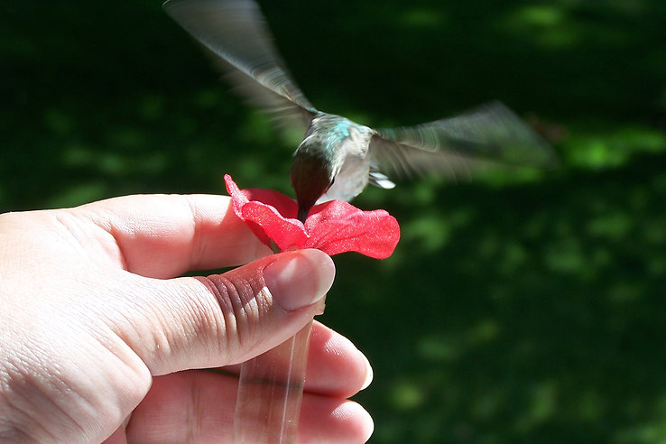 HUM-fi Hummingbird Bird Feeder