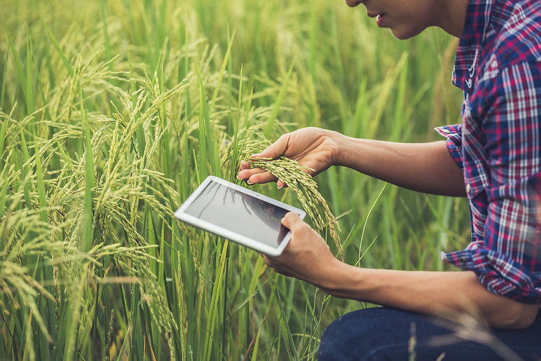 farmer-standing-rice-field-with-tablet.j