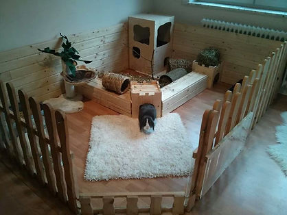 bunny set up.jpg