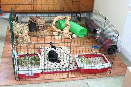 bunny housing.jpg