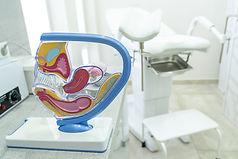 concept-study-anatomy-uterus-appendages-