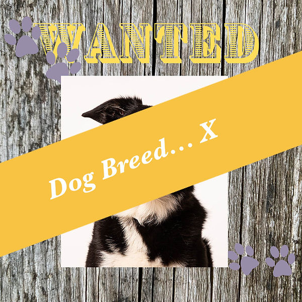 WANTED_POSTER-2 copy.jpg