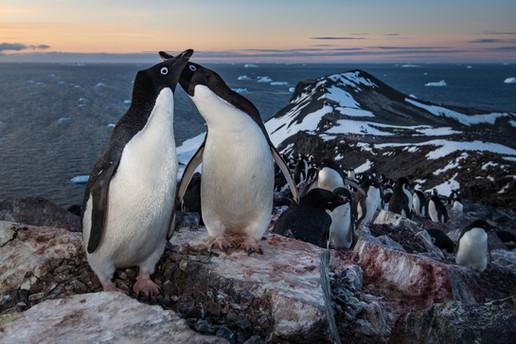 Buy this penguin print
