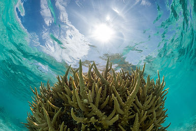 Coral lagoon Justin Hofman