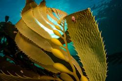 kelp falkland justin hofman
