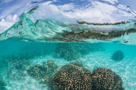 Buy this reef print