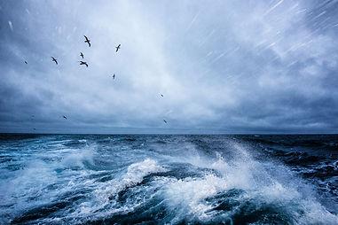 spray wave birds justin hofman ocean seascape
