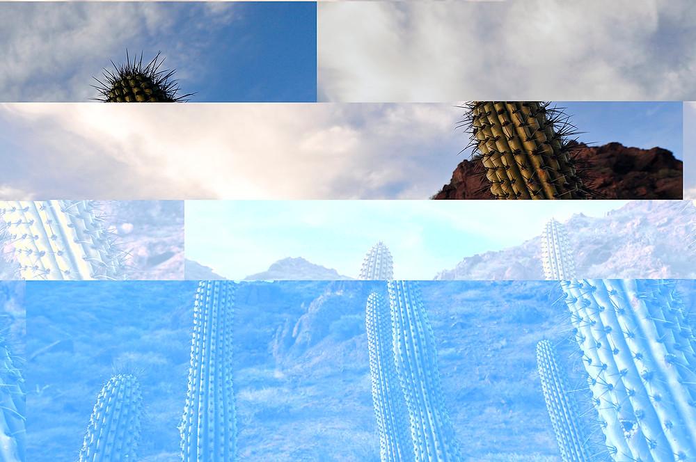 cactus corruption.jpg