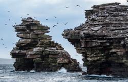 Shag rock Falkland Justin Hofman