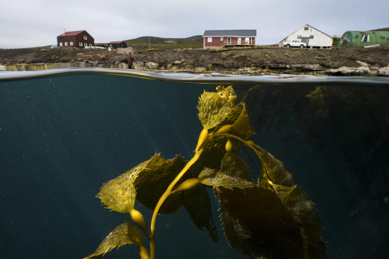 Kelp camp falkland justin hofman