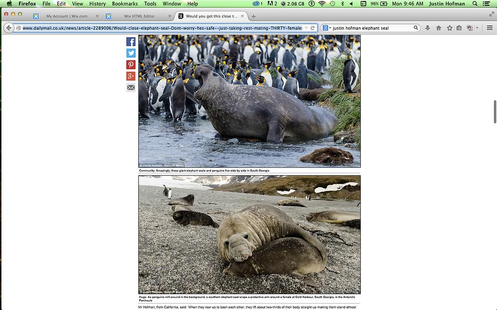 Southern elephant seals, Justin Hofman
