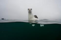 Albatross Justin Hofman Falkland