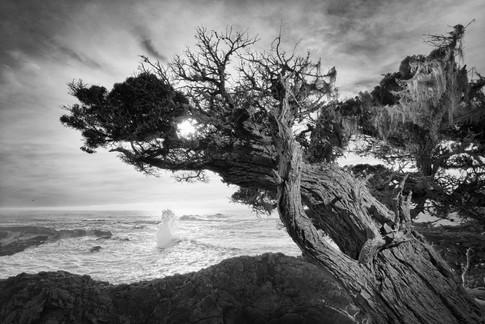 Buy this Point Lobos print