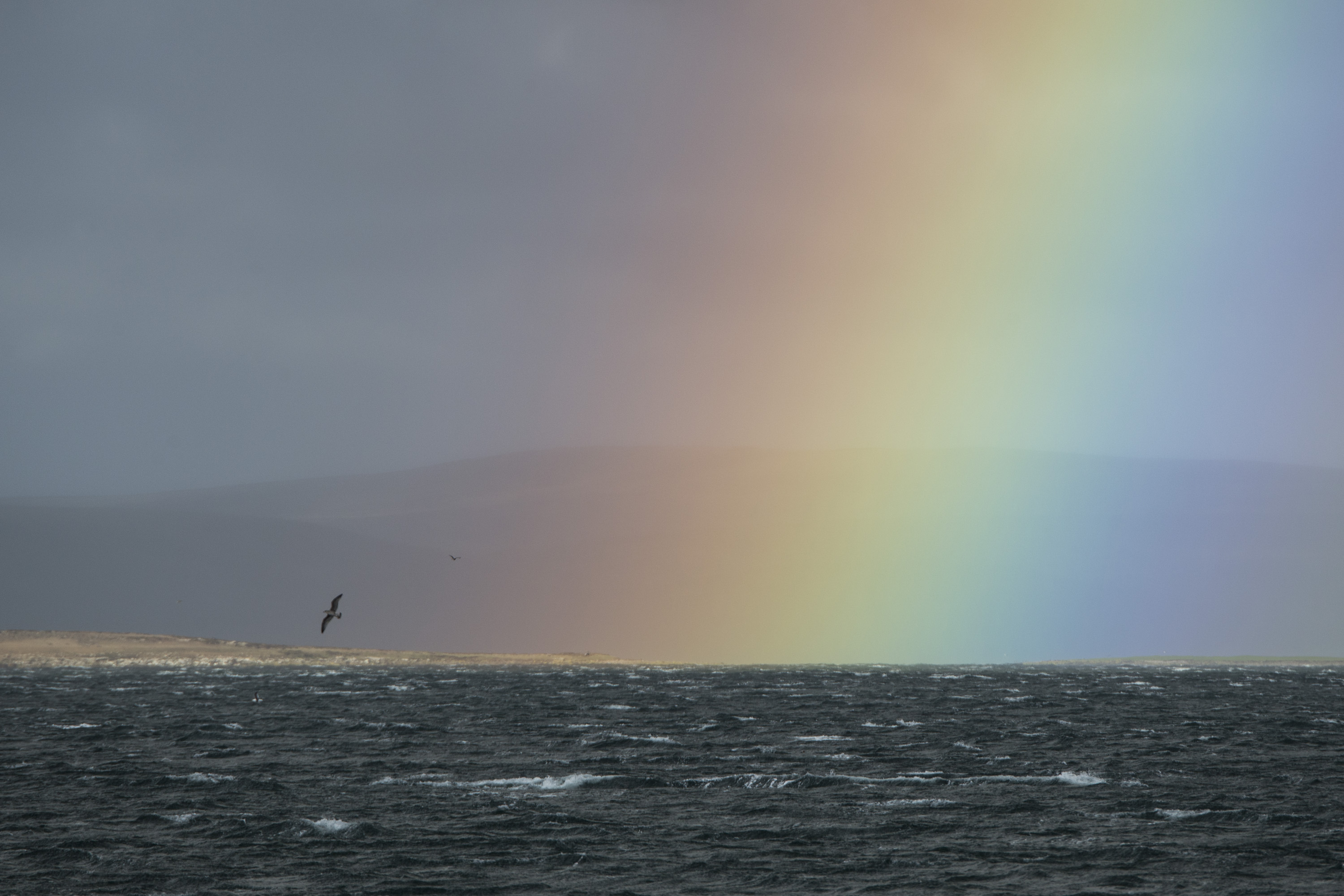 Rainbow and albatross Justin Hofman